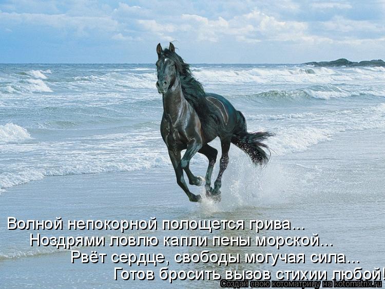 Котоматрица: Волной непокорной полощется грива... Ноздрями ловлю капли пены морской... Рвёт сердце, свободы могучая сила... Готов бросить вызов стихии люб