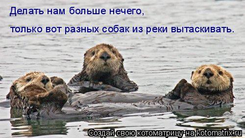 Котоматрица: Делать нам больше нечего, только вот разных собак из реки вытаскивать.