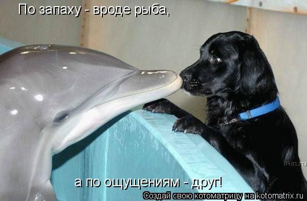 Котоматрица: По запаху - вроде рыба, а по ощущениям - друг!