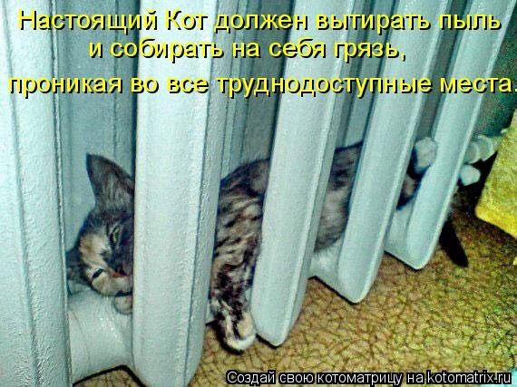 Котоматрица: Настоящий Кот должен вытирать пыль  и собирать на себя грязь,  проникая во все труднодоступные места.