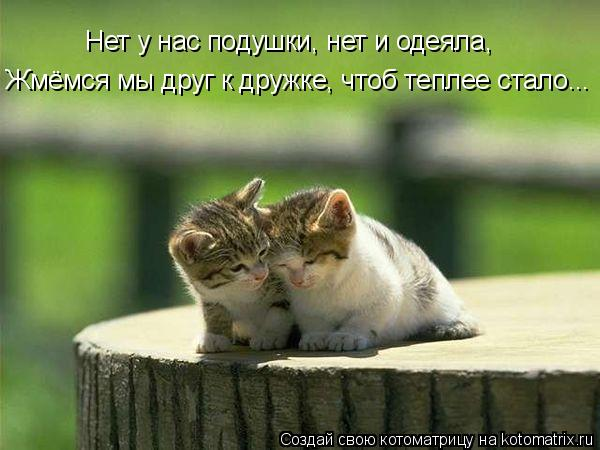 Котоматрица: Нет у нас подушки, нет и одеяла,  Жмёмся мы друг к дружке, чтоб теплее стало...
