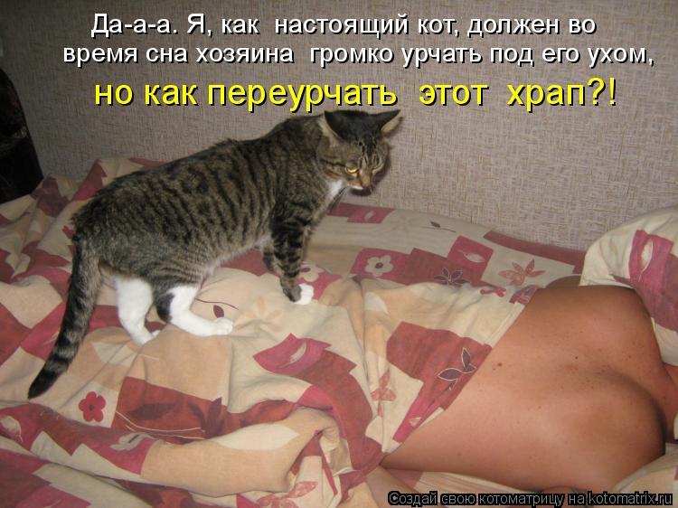 Котоматрица: Да-а-а… Я, как  настоящий кот, должен во  время сна хозяина  громко урчать под его ухом,  но как переурчать  этот  храп?!