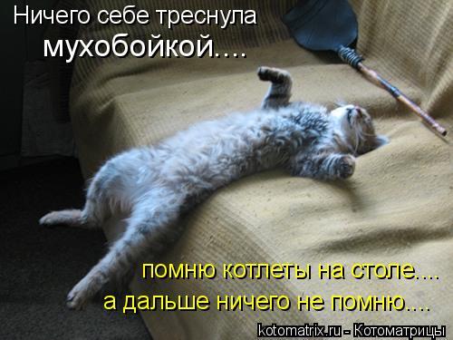 Котоматрица: Ничего себе треснула мухобойкой.... помню котлеты на столе.... а дальше ничего не помню....