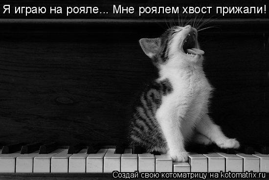 Котоматрица: Я играю на рояле... Мне роялем хвост прижали!