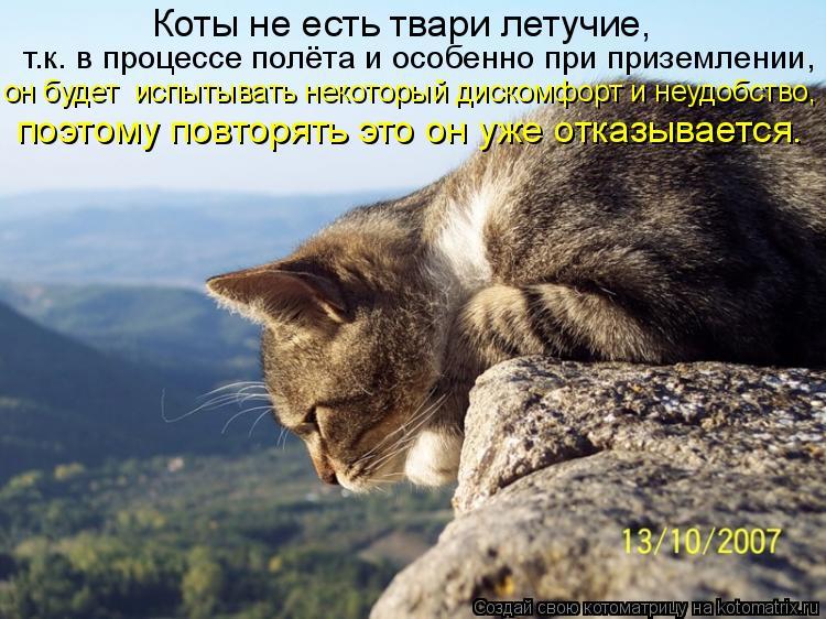 Котоматрица: Коты не есть твари летучие,  т.к. в процессе полёта и особенно при приземлении,   он будет  испытывать некоторый дискомфорт и неудобство,  поэ