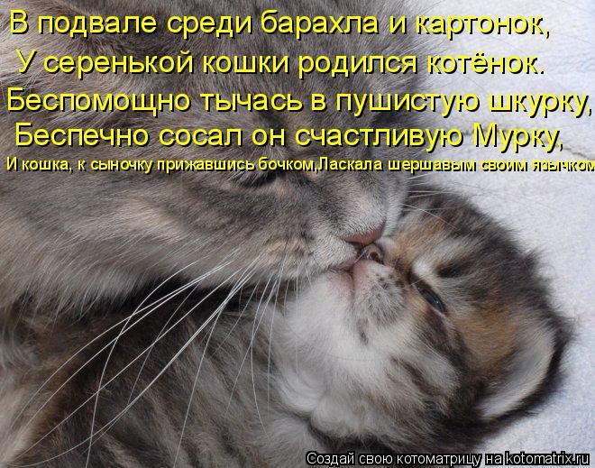 Прикольные поздравленья о кошках 781