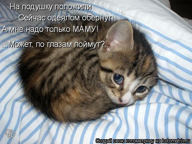 Котоматрица: На подушку положили Сейчас одеялом обернут А мне надо только МАМУ! ...Может, по глазам поймут?..
