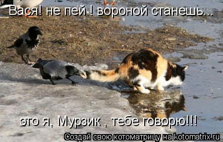 Котоматрица: это я, Мурзик , тебе говорю!!! Вася! не пей ! вороной станешь...