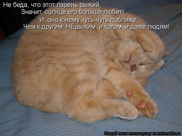 Котоматрица: Не беда, что этот парень рыжий, Значит, солнце его больше любит! И  оно к нему чуть-чуть поближе, Чем к другим, НЕрыжим, и котам, и даже людям!