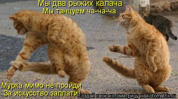 Котоматрица: Мы два рыжих калача Мы танцуем ча-ча-ча Мурка мимо не пройди За искусство заплати!