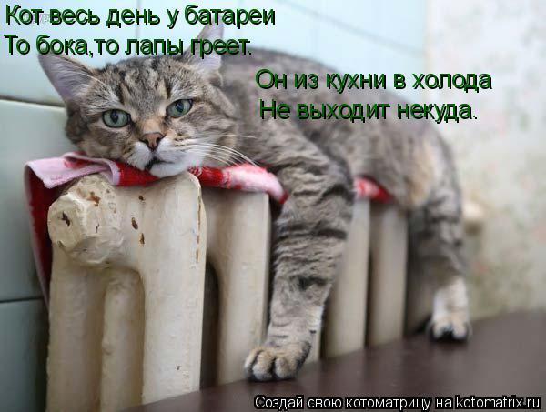 Котоматрица: Поиск котоматрицы