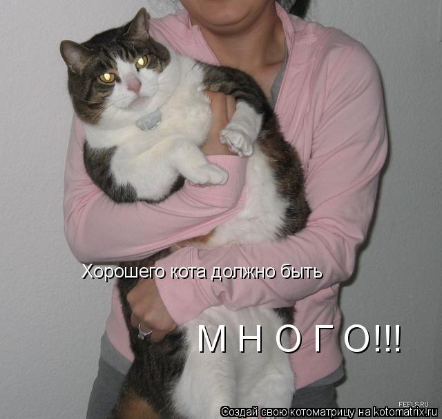Котоматрица: Хорошего кота должно быть М Н О Г О!!!