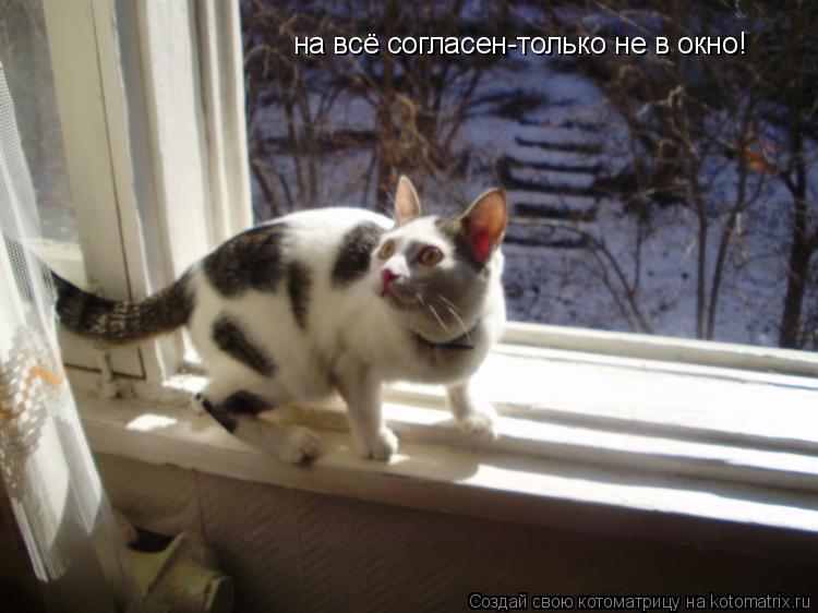 Котоматрица: на всё согласен-только не в окно!