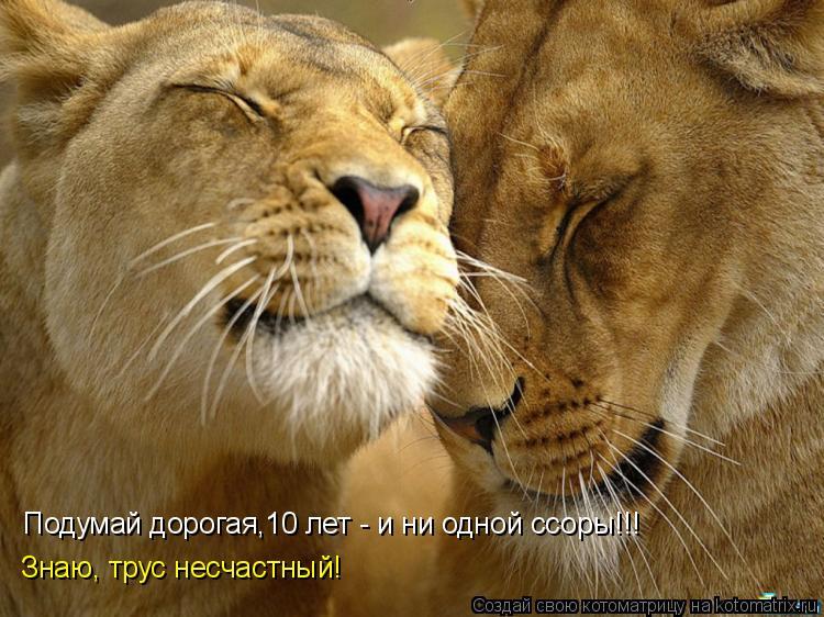 Котоматрица: Подумай дорогая,10 лет - и ни одной ссоры!!! Знаю, трус несчастный!