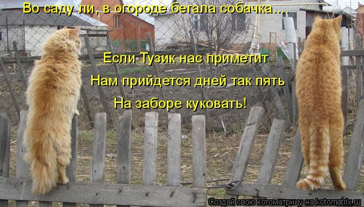 Котоматрица: Во саду ли, в огороде бегала собачка.... Если Тузик нас приметит Нам прийдется дней так пять На заборе куковать!
