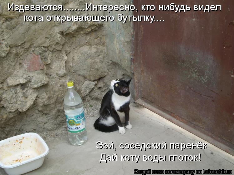 Котоматрица: Издеваются........Интересно, кто нибудь видел  кота открывающего бутылку.... Ээй, соседский паренёк Дай коту воды глоток!