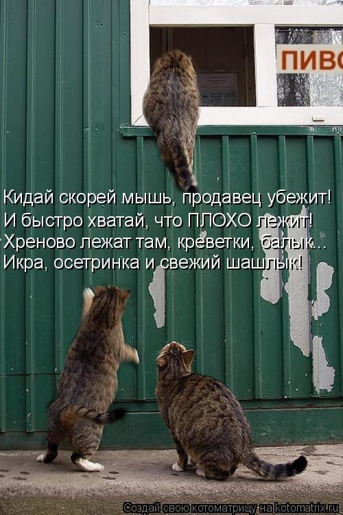 Котоматрица: Кидай скорей мышь, продавец убежит! И быстро хватай, что ПЛОХО лежит! Хреново лежат там, креветки, балык... Икра, осетринка и свежий шашлык!
