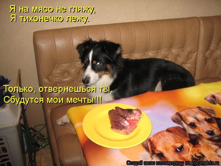 Котоматрица: Я на мясо не гляжу, Я на мясо не гляжу,  Я тихонечко лежу. Только, отвернешься ты, Сбудутся мои мечты!!!