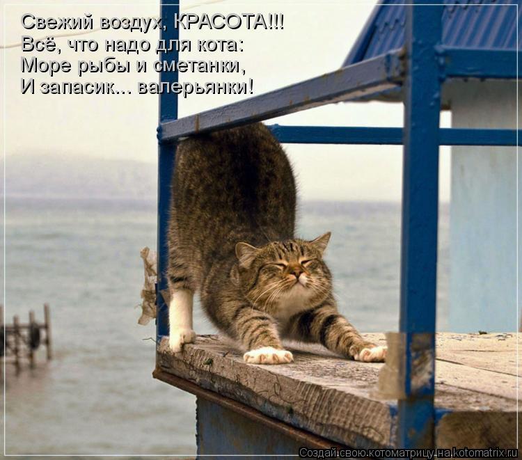 Котоматрица: Свежий воздух, КРАСОТА!!! Всё, что надо для кота: Море рыбы и сметанки, И запасик... валерьянки!