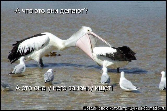 Котоматрица: -А что это они делают? А это она у него заначку ищет!