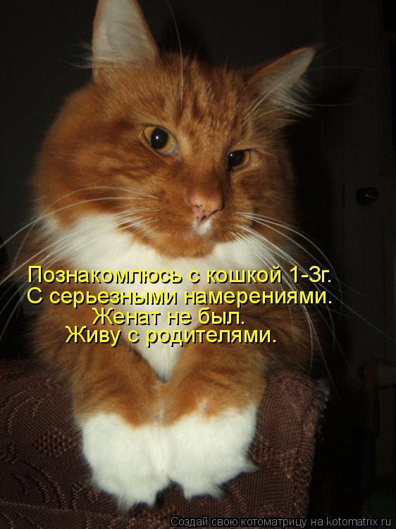 Познакомлюсь с кошкой 1-3г. С серьезными намерениями. Женат не был. Живу с родителями.
