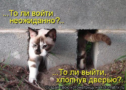 Котоматрица: ...То ли выйти,  хлопнув дверью?.. ...То ли войти  неожиданно?..