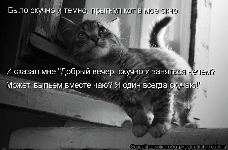 """Котоматрица: Было скучно и темно, прыгнул кот в мое окно И сказал мне:""""Добрый вечер, скучно и заняться нечем? Может, выпьем вместе чаю? Я один всегда скучаю"""