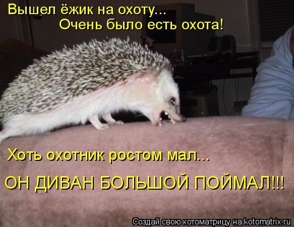 Котоматрица: Вышел ёжик на охоту... Очень было есть охота! Хоть охотник ростом мал... ОН ДИВАН БОЛЬШОЙ ПОЙМАЛ!!!