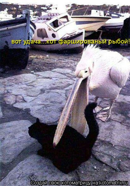 Котоматрица: вот удача...кот фаршированый рыбой!