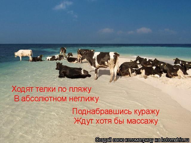 Котоматрица: Ходят телки по пляжу В абсолютном неглижу Поднабравшись куражу Ждут хотя бы массажу