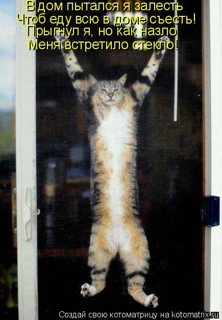 Котоматрица: В дом пытался я залесть Чтоб еду всю в доме съесть! Прыгнул я, но как назло Меня встретило стекло!