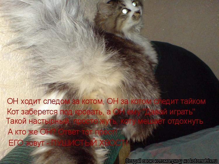 """Котоматрица: ОН ходит следом за котом, ОН за котом следит тайком Кот заберется под кровать, а ОН ему:""""Давай играть"""" Такой настырный, просто жуть, коту меша"""