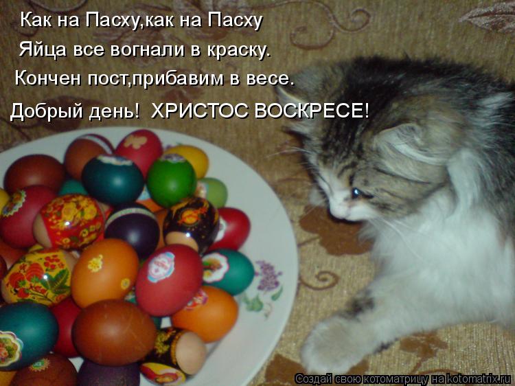 Котоматрица: Как на Пасху,как на Пасху Яйца все вогнали в краску. Кончен пост,прибавим в весе. Добрый день!  ХРИСТОС ВОСКРЕСЕ!