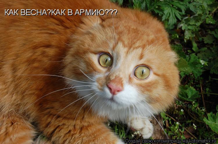 http://kotomatrix.ru/images/lolz/2009/04/22/px.jpg