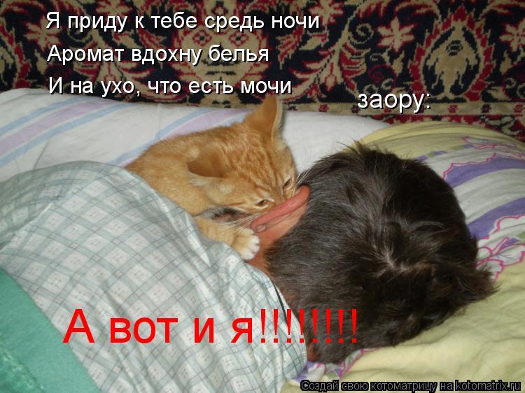 Котоматрица: Я приду к тебе средь ночи Аромат вдохну белья И на ухо, что есть мочи заору: А вот и я!!!!!!!!