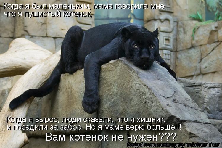 Котоматрица: Когда я был маленьким, мама говорила мне,  что я пушистый котенок, Когда я вырос, люди сказали, что я хищник, и посадили за забор. Но я маме вер