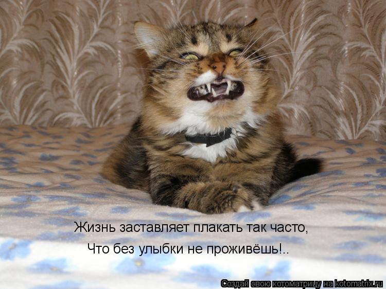 Котоматрица: Жизнь заставляет плакать так часто, Что без улыбки не проживёшь!..