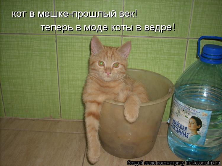 Котоматрица: кот в мешке-прошлый век! теперь в моде коты в ведре!