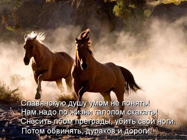 Славянскую душу умом не понять! Нам надо по жизни галопом скакать! Сносить лбом преграды, убить свои ноги... Потом обвинять, дураков и дороги!
