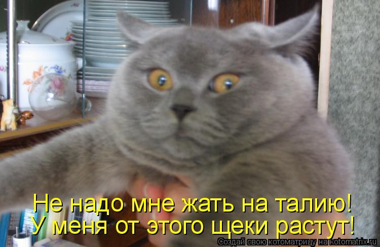 Котоматрица: Не надо мне жать на талию! У меня от этого щеки растут!