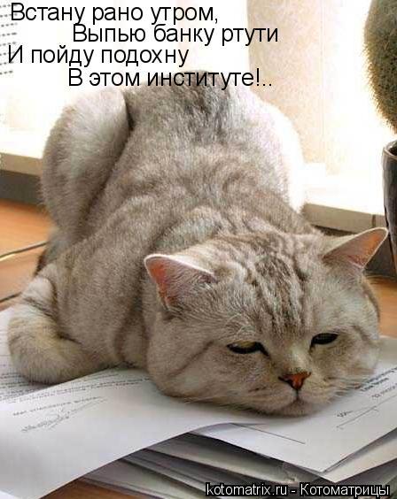 Котоматрица: Встану рано утром, Выпью банку ртути И пойду подохну В этом институте!..