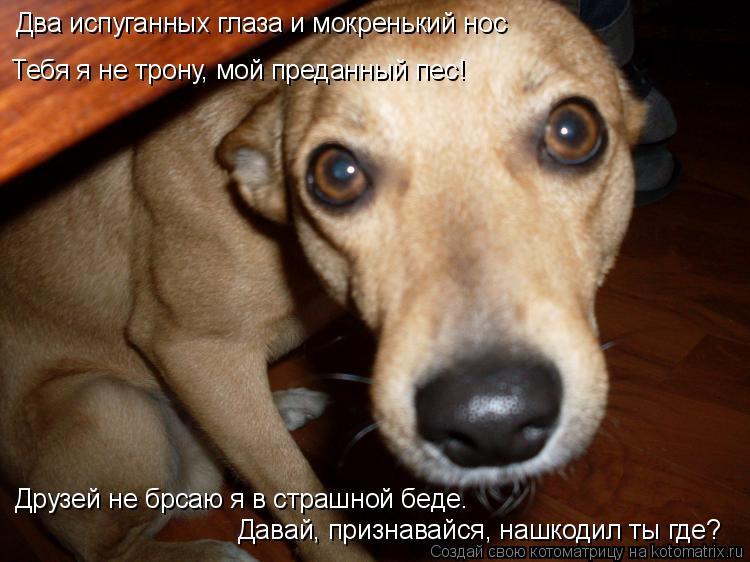 Котоматрица: Два испуганных глаза и мокренький нос Тебя я не трону, мой преданный пес! Друзей не брсаю я в страшной беде. Давай, признавайся, нашкодил ты г