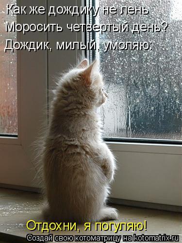Котоматрица: Как же дождику не лень Моросить четвертый день? Дождик, милый, умоляю: Отдохни, я погуляю!