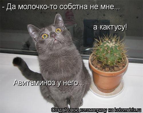 Котоматрица: - Да молочко-то собстна не мне... а кактусу! Авитаминоз у него...