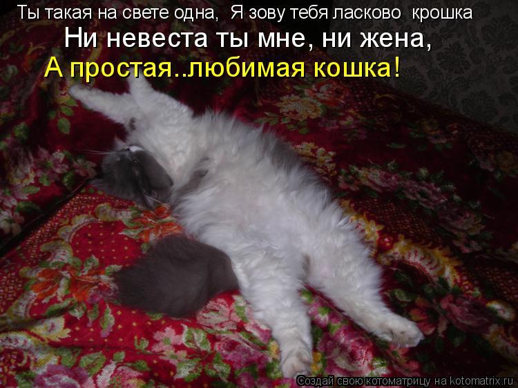 Котоматрица: Ты такая на свете одна,  Я зову тебя ласково «крошка»   Ни невеста ты мне, ни жена,    А простая……любимая кошка!