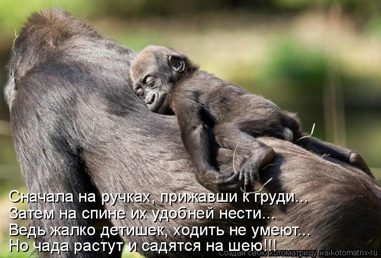 Котоматрица: Сначала на ручках, прижавши к груди... Затем на спине их удобней нести... Ведь жалко детишек, ходить не умеют... Но чада растут и садятся на шею!!