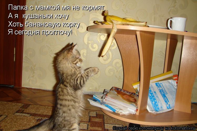 Котоматрица: Папка с мамкой мя не кормят, А я  кушаньки хочу Хоть банановую корку Я сегодня проглочу!