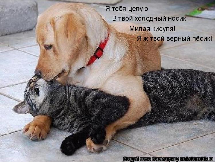 Котоматрица: Я тебя целую  В твой холодный носик. Милая кисуля! Я ж твой верный пёсик!