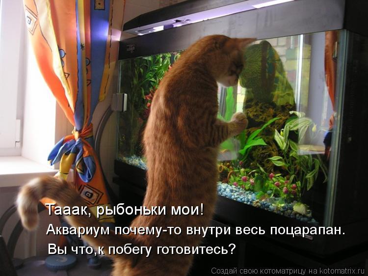 Котоматрица: Да вы,похоже,к побегу готовитесь! Вы что,к побегу готовитесь? Тааак, рыбоньки мои! Аквариум почему-то внутри весь поцарапан.