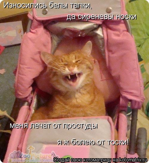 Котоматрица: Износились белы тапки, да сиреневы носки меня лечат от простуды я ж болею от тоски!